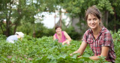 Πρόσκληση για την υποβολή αιτήσεων στο πρόγραμμα ενίσχυσης μικρών γεωργικών εκμεταλλεύσεων