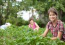 Αγροτικές επιδοτήσεις 14.000 ευρώ: Ποιους αφορά