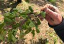 Ερώτηση: Ζημιές από χαλαζόπτωση σε περιοχές των Δήμων Κορινθίων και Νεμέας