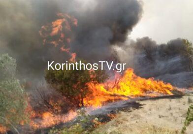 Μάχη με τις φλόγες στο Καλέντζι Κορινθίας – Κινητοποίηση της Πυροσβεστικής -VIDEO